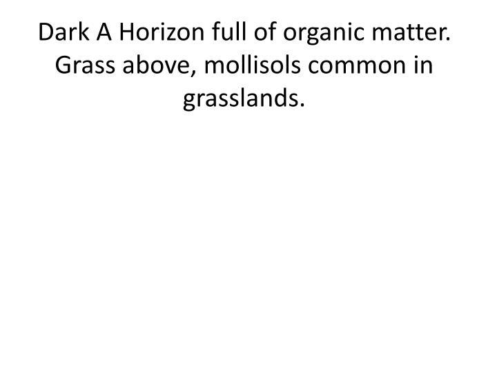 Dark A Horizon full of organic matter.