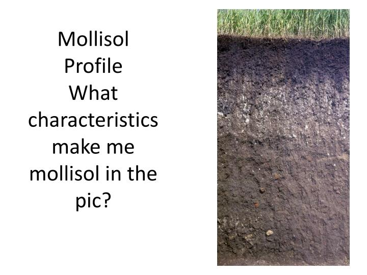 Mollisol