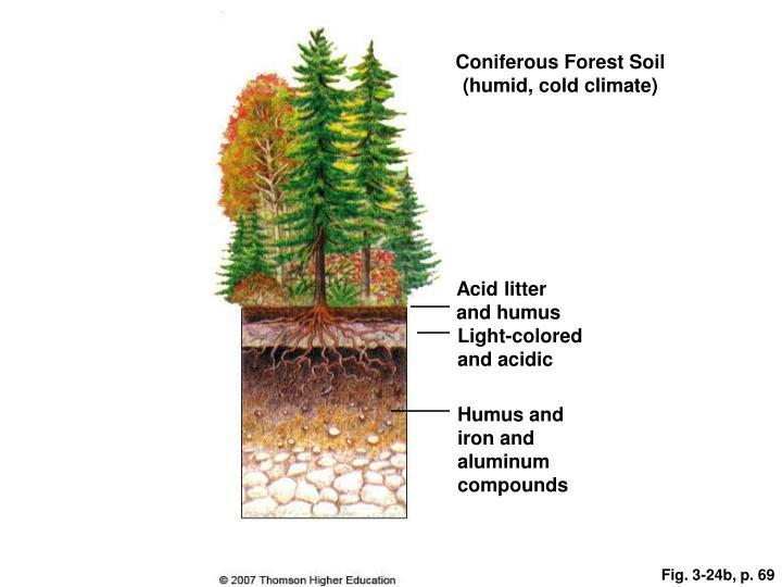 Coniferous Forest Soil