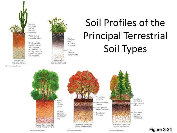 Soil Profiles of the Principal Terrestrial Soil Types