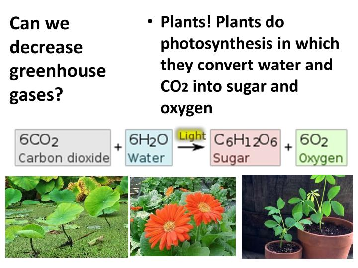 Can we decrease greenhouse gases?