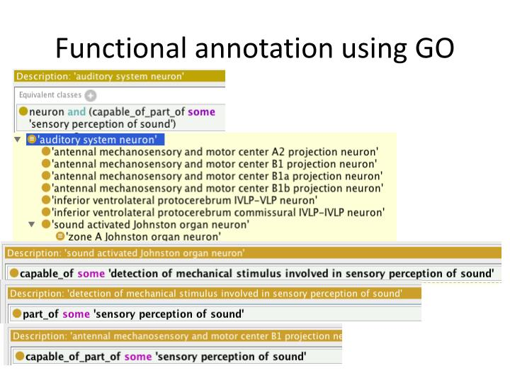 Functional annotation using GO