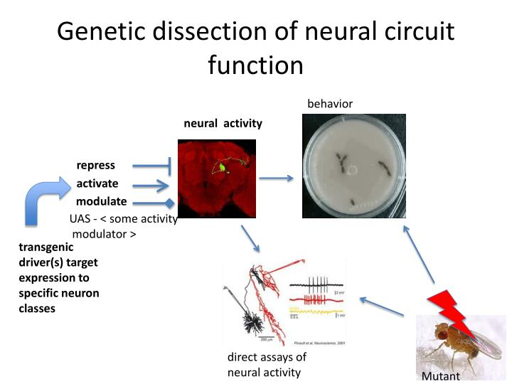 Genetic dissection of neural circuit function