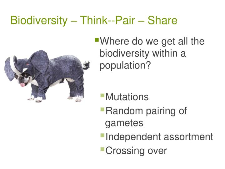 Biodiversity think pair share