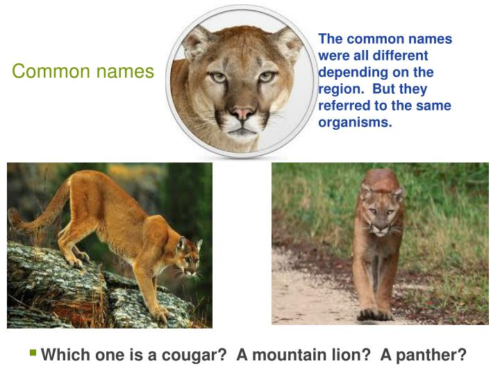 The common names were all different depending on the region.  But they referred to the same organisms.