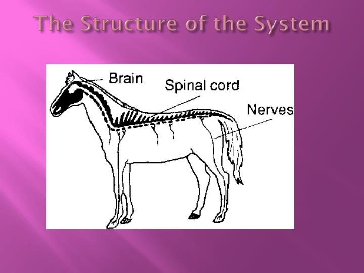 The Structure of the System
