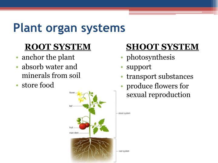 Plant organ systems