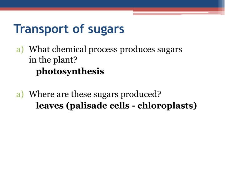 Transport of sugars