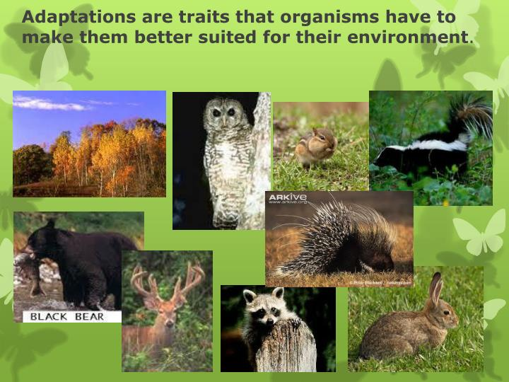Adaptations are traits that organisms have to make them better suited for their environment