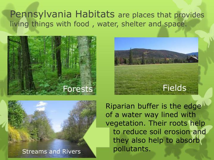 Pennsylvania Habitats