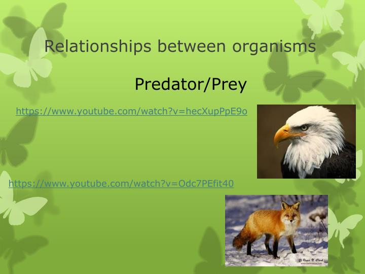 Relationships between organisms