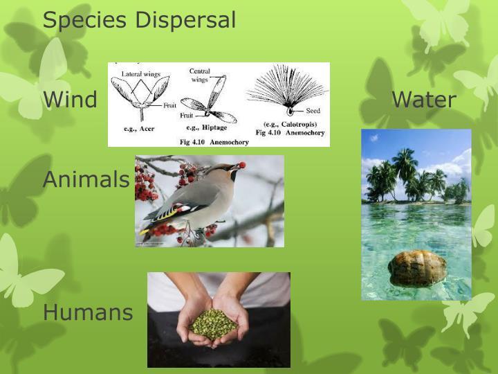 Species Dispersal