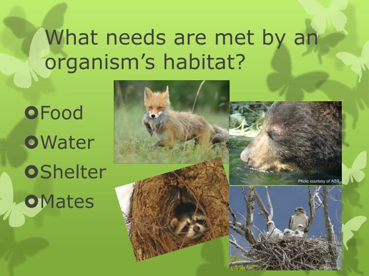 What needs are met by an organism's habitat?