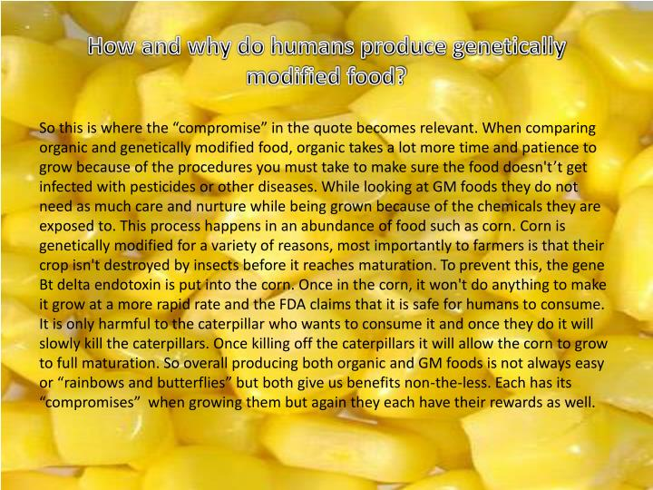 How and why do humans produce genetically modified food?