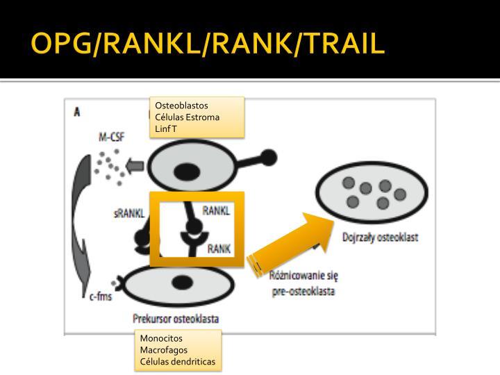 OPG/RANKL/RANK/TRAIL