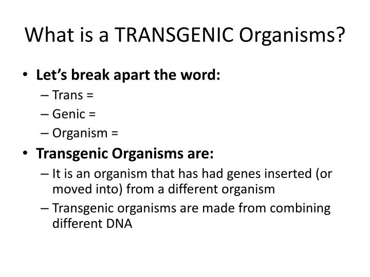 What is a TRANSGENIC Organisms?
