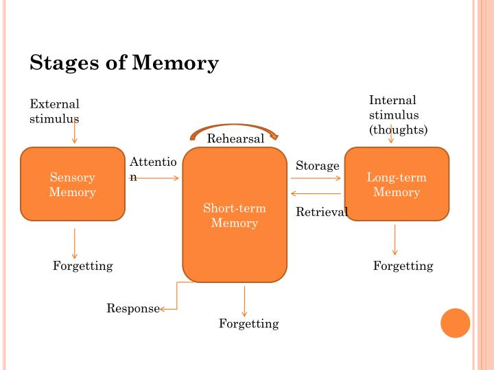 Stages of Memory