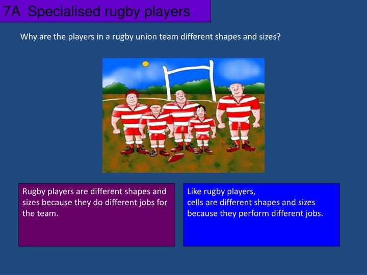 7A  Specialised rugby players