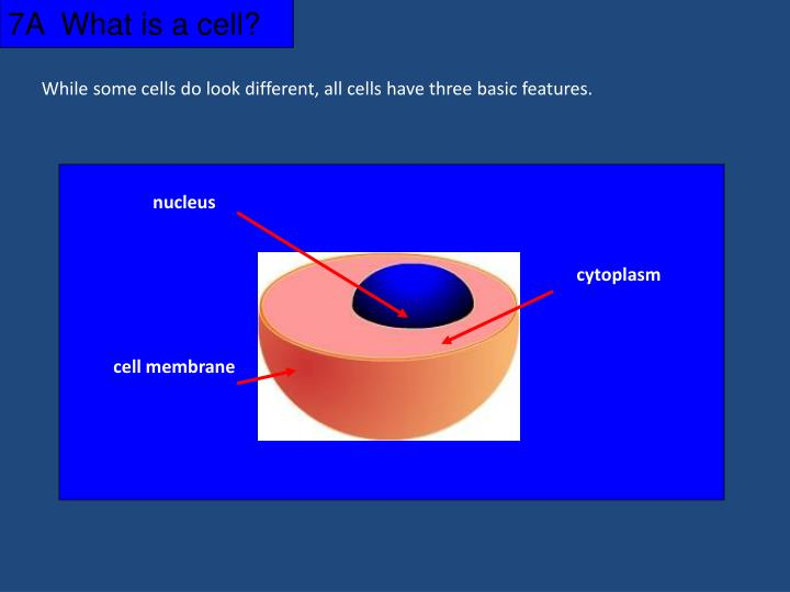 7A  What is a cell?