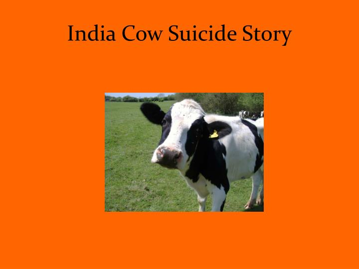 India Cow Suicide Story
