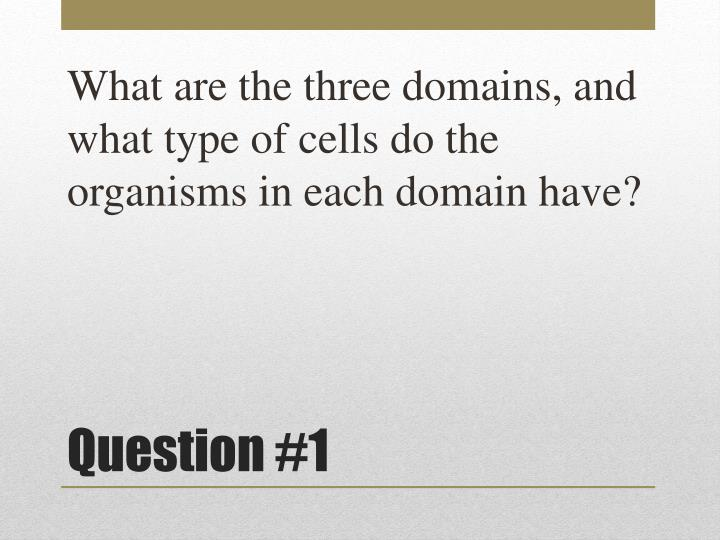 What are the three domains, and what type of cells do the organisms in each domain have?