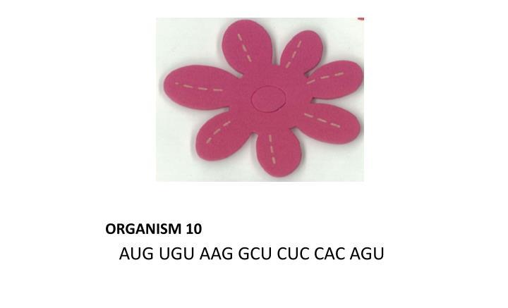 ORGANISM 10