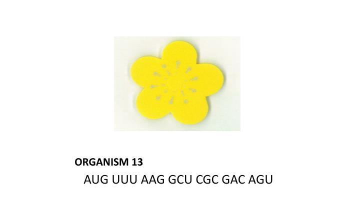 ORGANISM 13