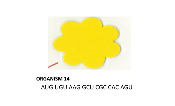 ORGANISM 14