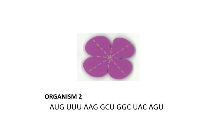 ORGANISM 2