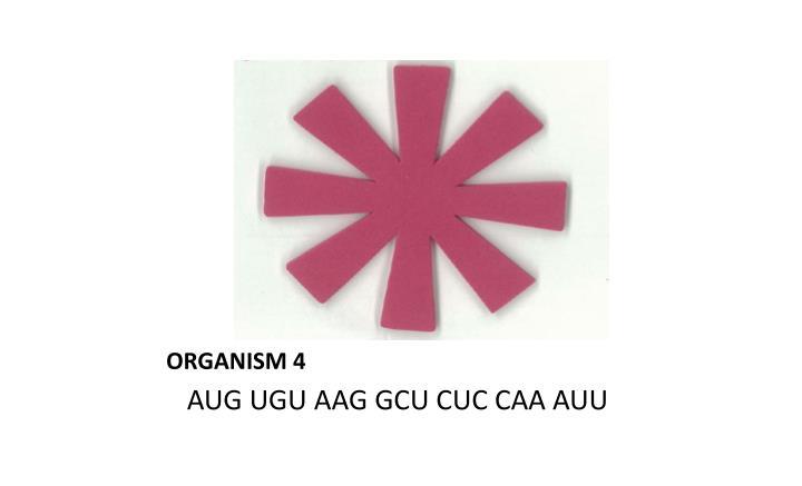 ORGANISM 4