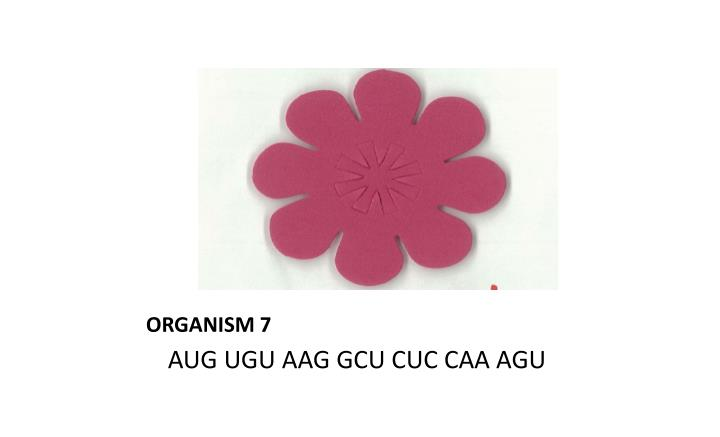 ORGANISM 7