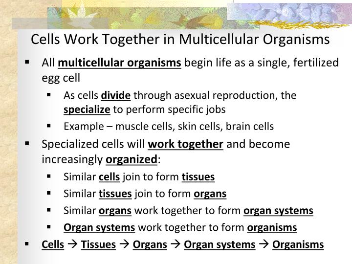 Cells Work Together in