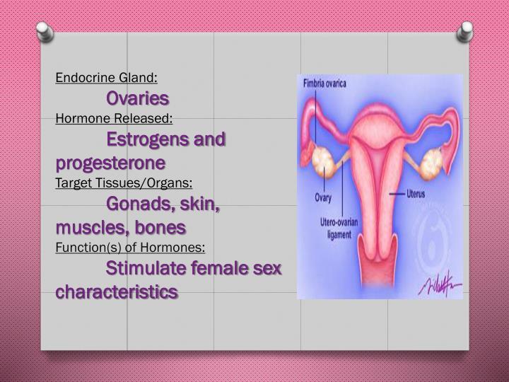 Endocrine Gland: