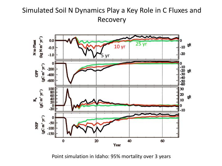 Simulated Soil N Dynamics Play a Key Role in C Fluxes and Recovery