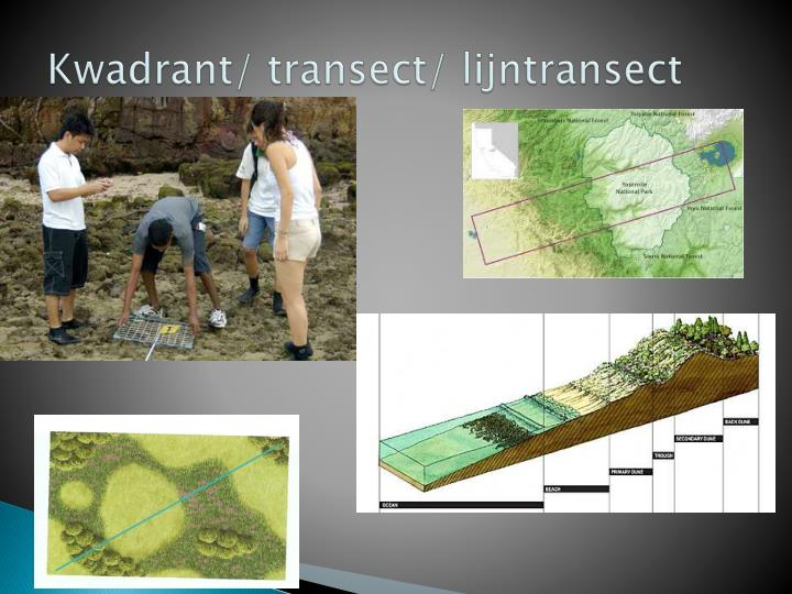Kwadrant/ transect/ lijntransect