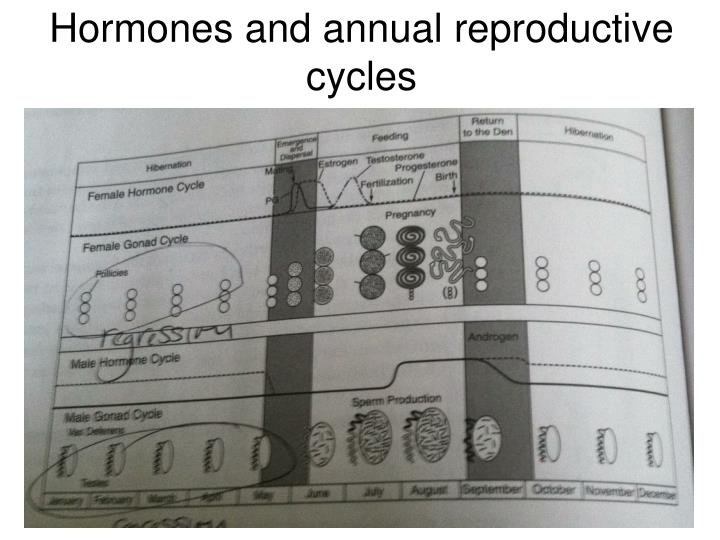 Hormones and annual reproductive cycles