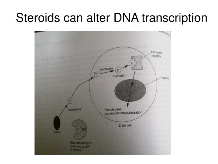 Steroids can alter DNA transcription