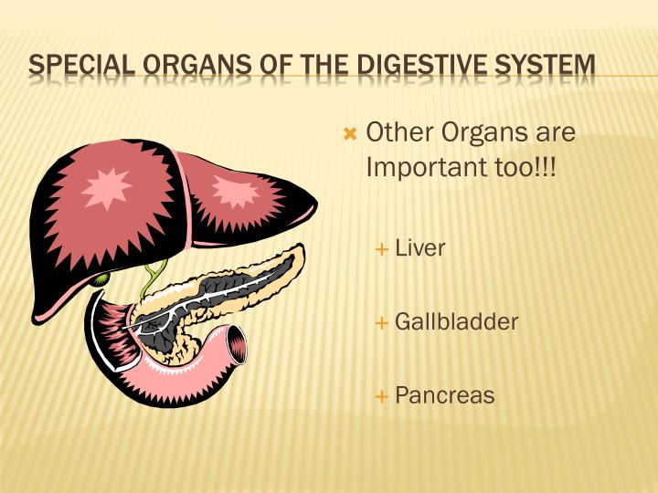Other Organs are Important too!!!