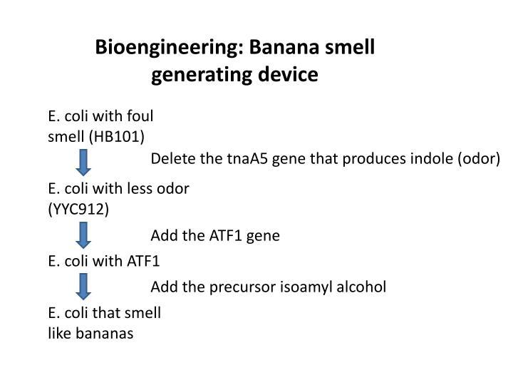 Bioengineering: Banana smell generating device