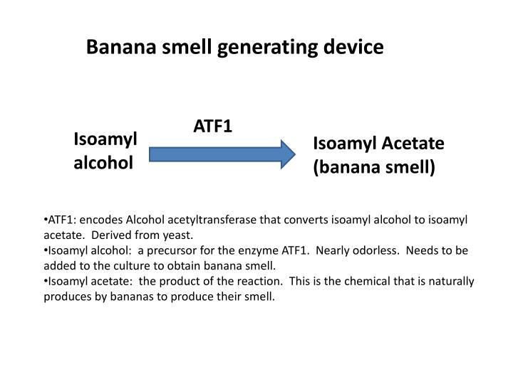 Banana smell generating device