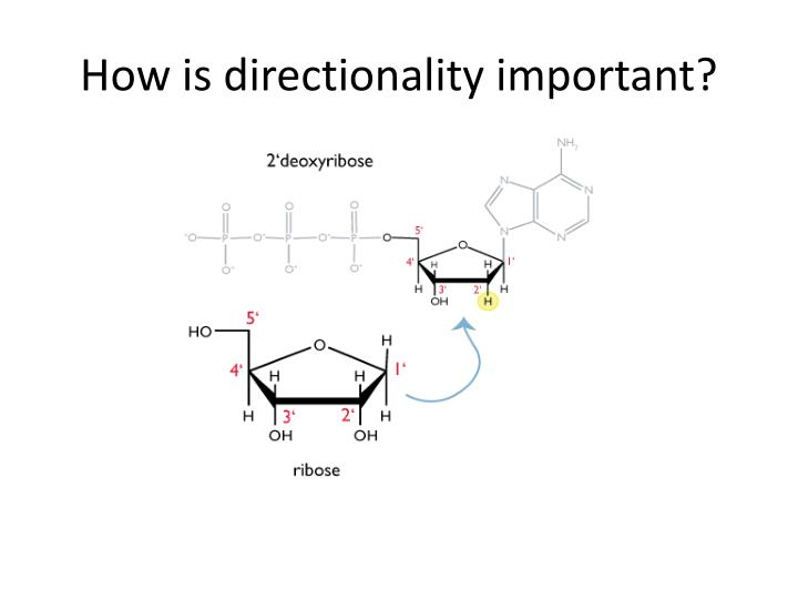 How is directionality important?