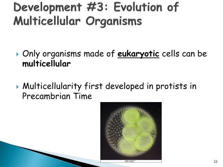 Development #3: Evolution of