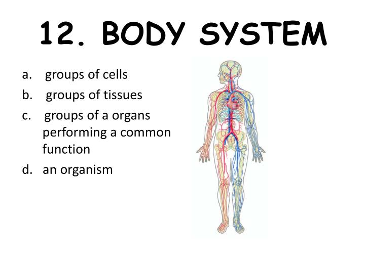 12. BODY SYSTEM