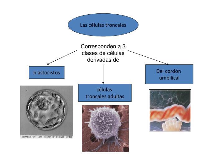 Las células troncales