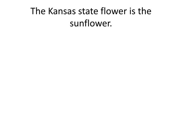 The Kansas state flower is