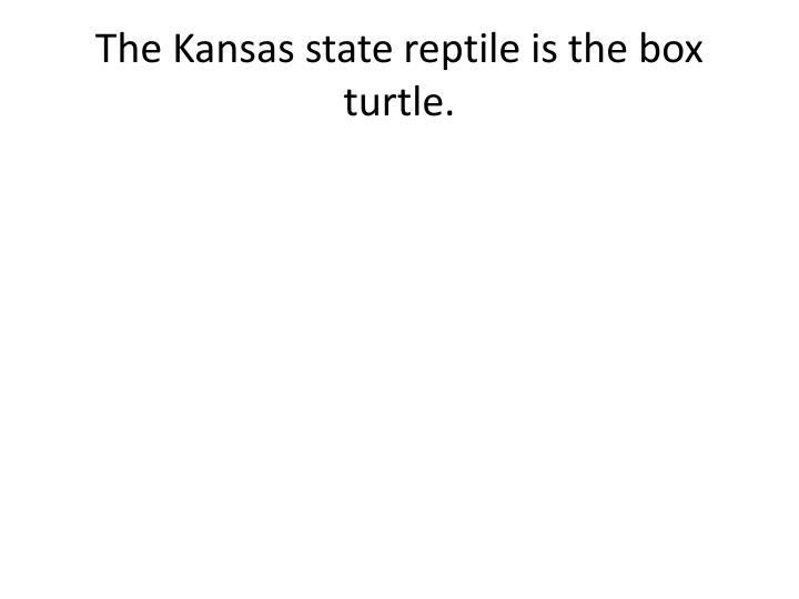 The Kansas state reptile is
