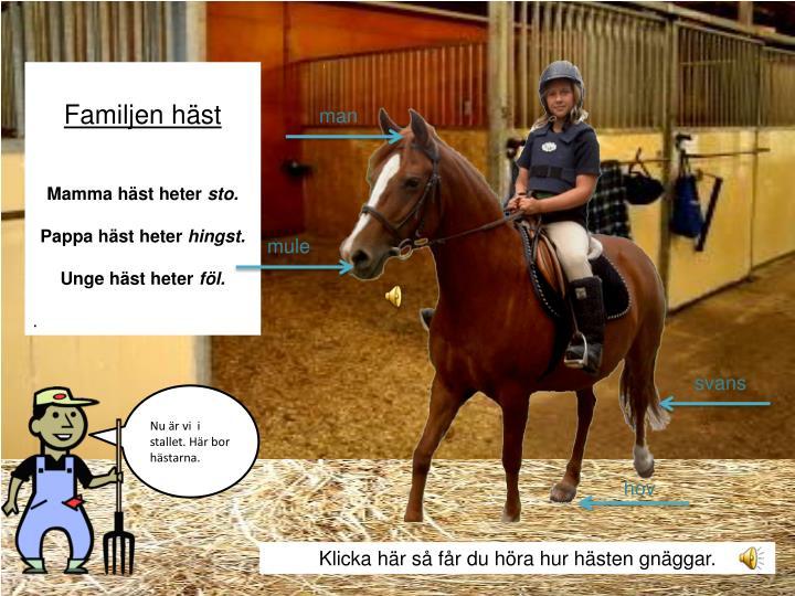 Familjen häst