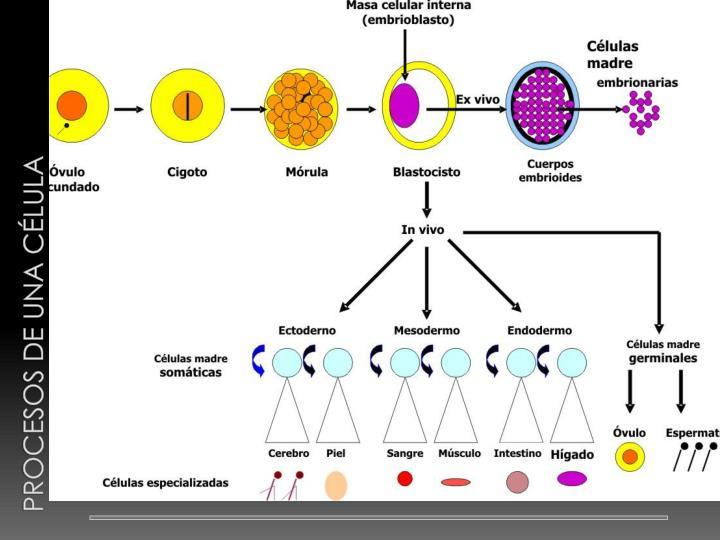 Procesos de una célula