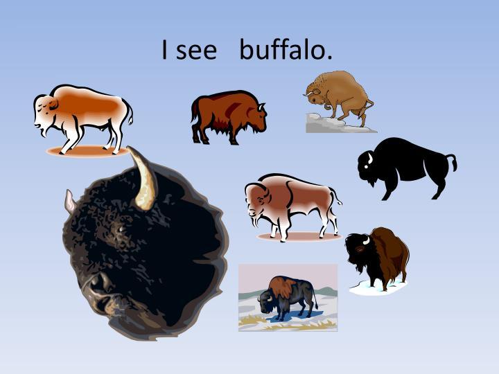 I see   buffalo.