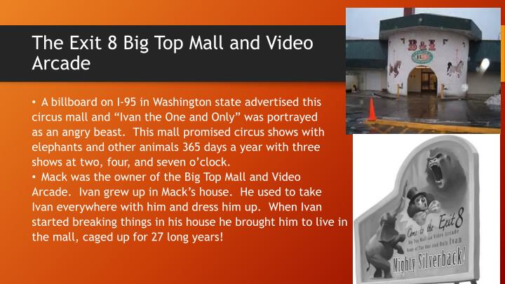 The Exit 8 Big Top Mall and Video